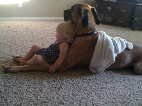 Toddler leaning on dog
