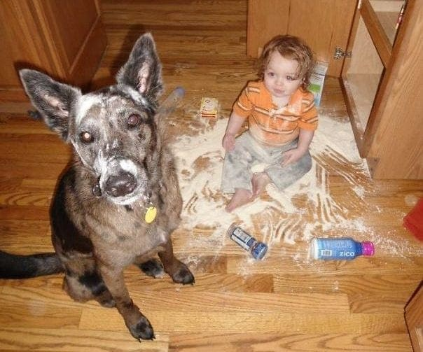 Dog and child sitting in a mess