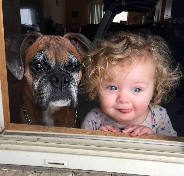 Dog and baby looking out the window