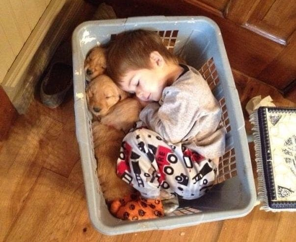 A boy and two puppies sleeping in a laundry basket