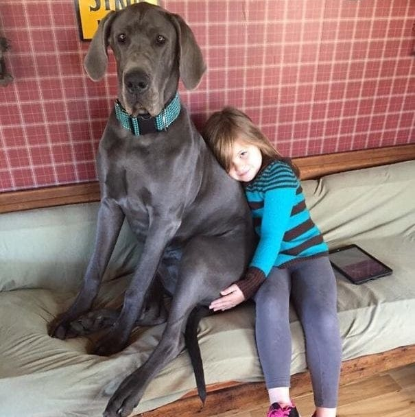 A girl sitting next to a huge dog