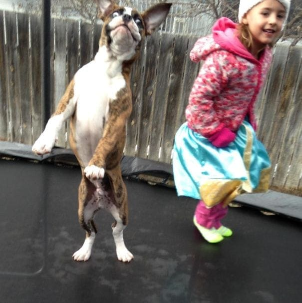 A girl and dog jumping on a trampoline