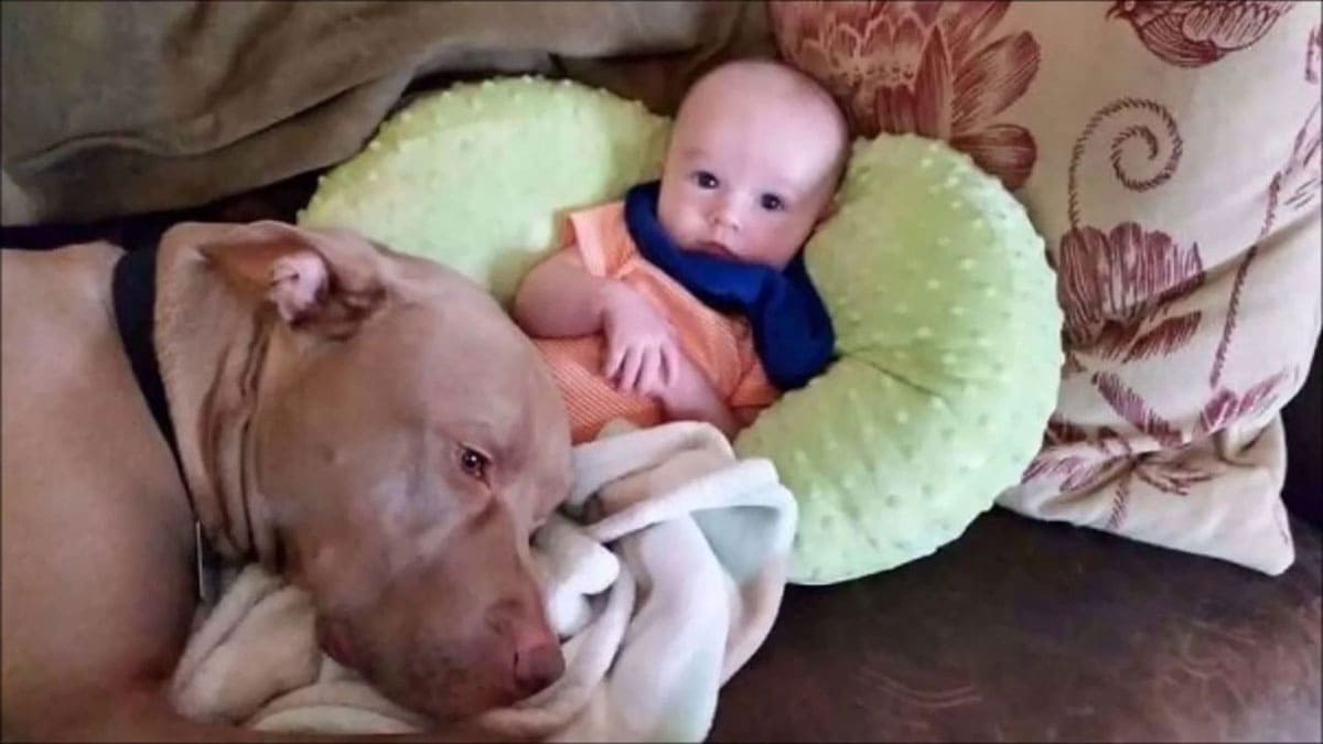 Dog snuggling up to baby
