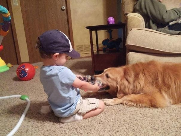 Child playing with his dog