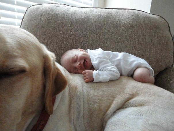 A baby laying on the back of her dog