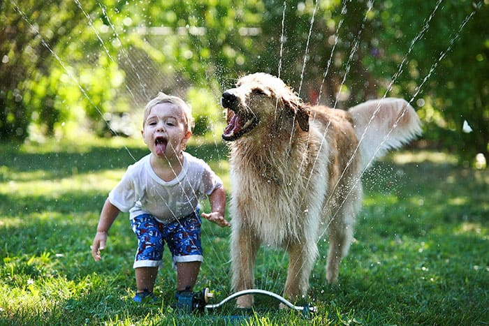 Boy and dog playing in sprinklers