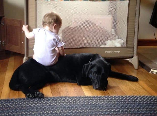 Babysitting on a dog