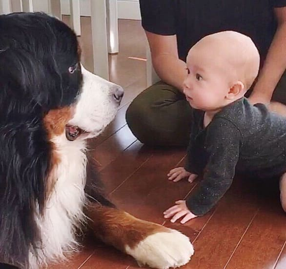 Baby and dog staring at each other