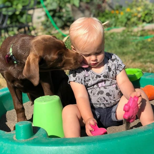 Baby playing in a sandbox with dog