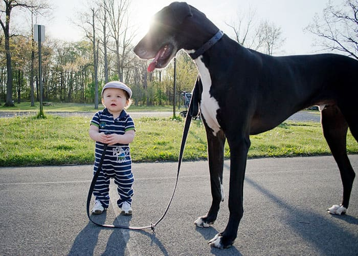 Baby standing next to a big dog
