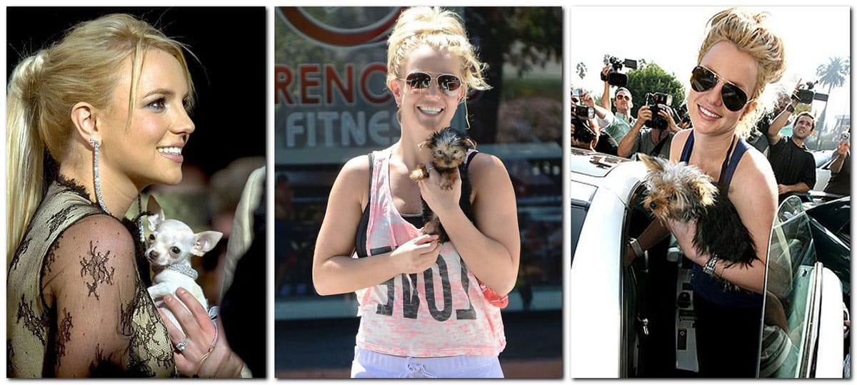 Britney Spears and her dogs