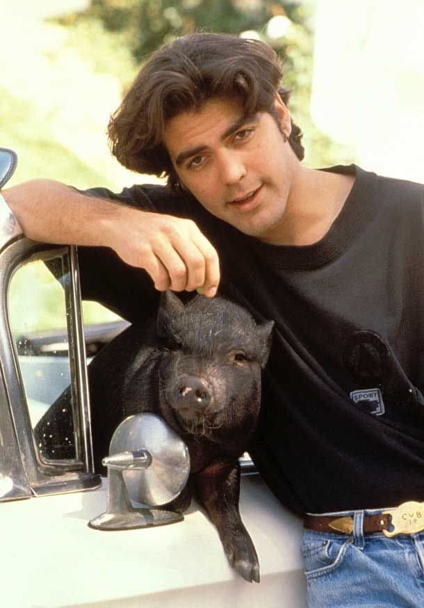 George Clooney and his pig