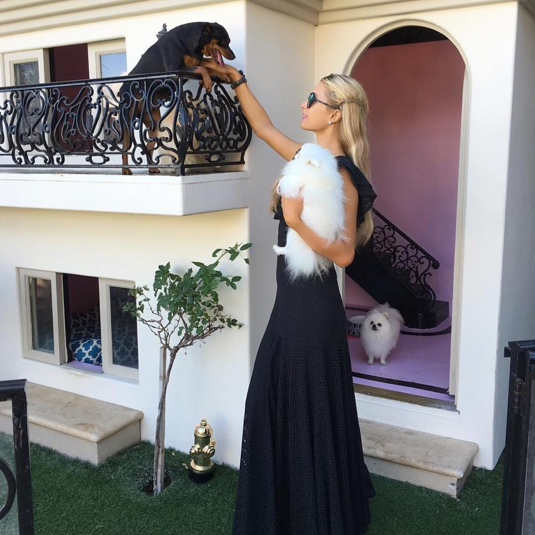 Paris Hilton and her dogs in a dog house