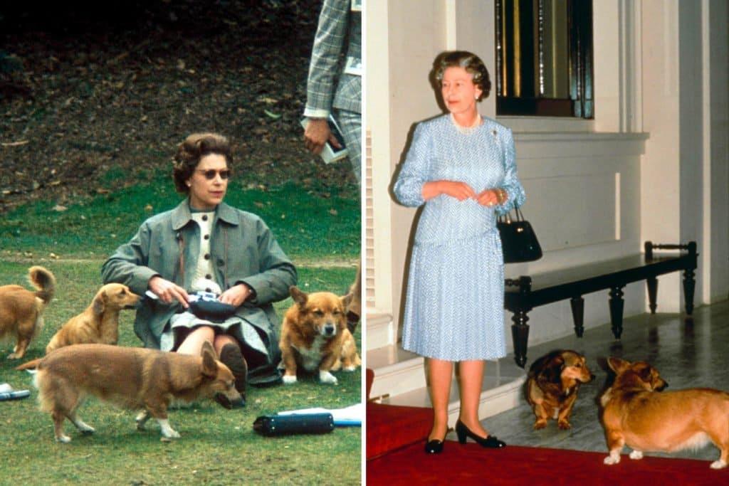 Queen Elizabeth and her dogs