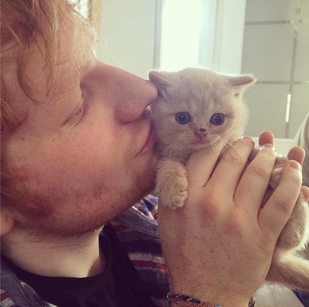 Ed Sheeran and his cat