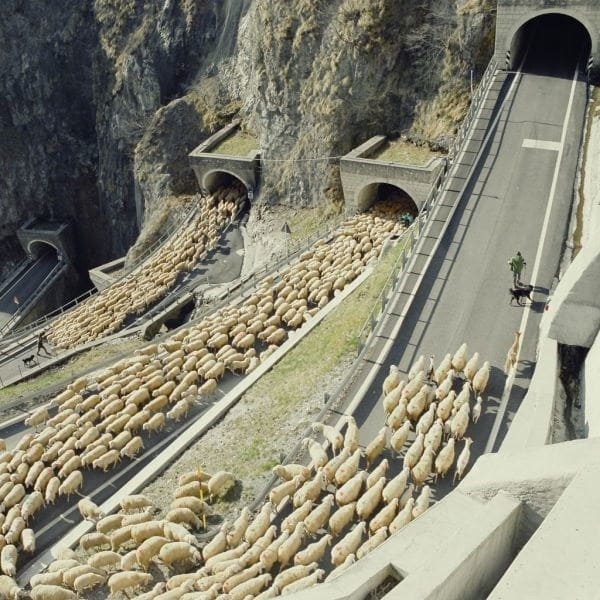a man leading his flock of sheep up a mountain road