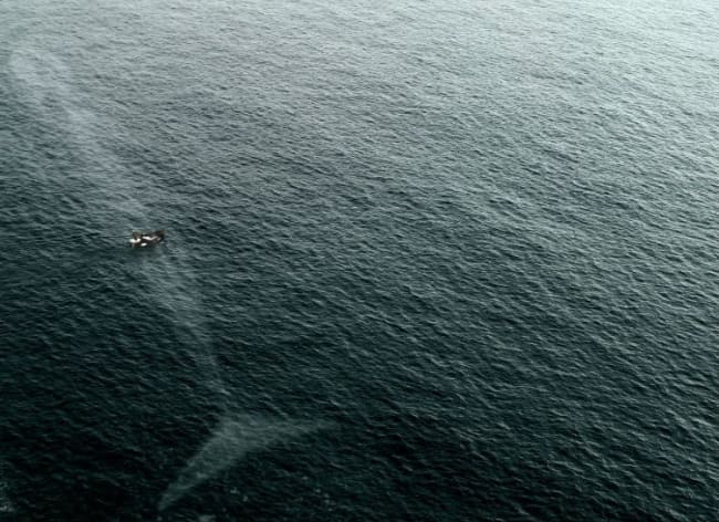 A boat floating above a large whale