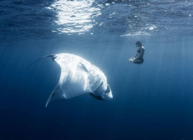A swimmer floating next to a stingray