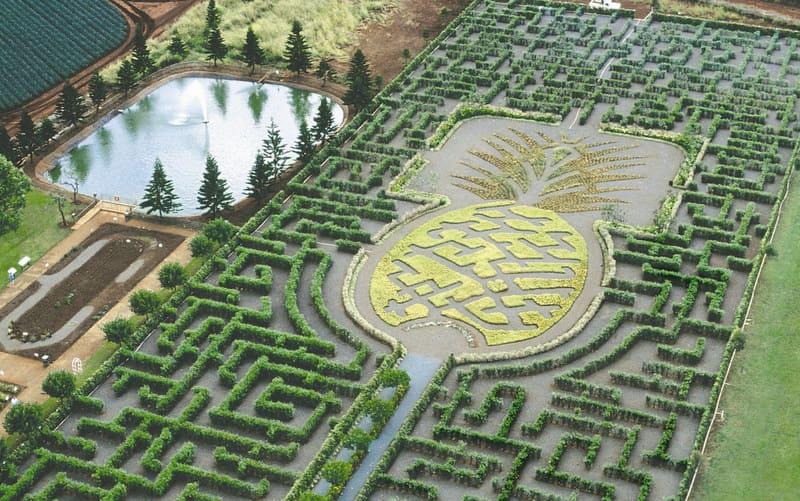 The World's Longest Plant Maze