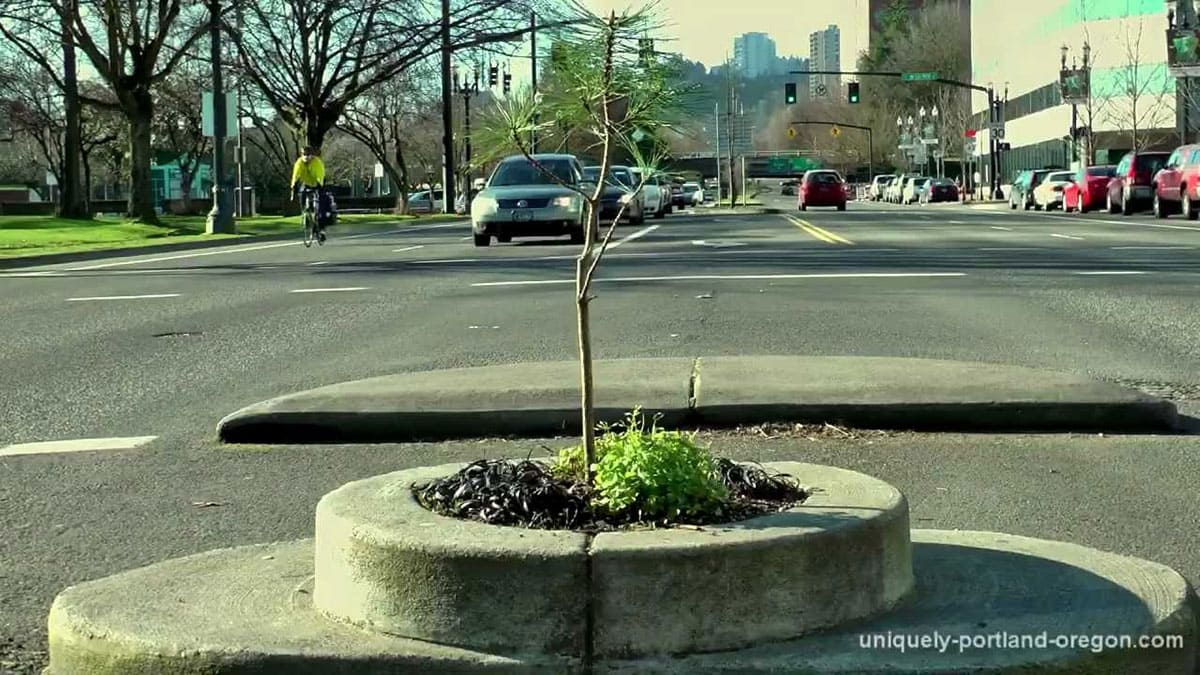 The World's Smallest Park