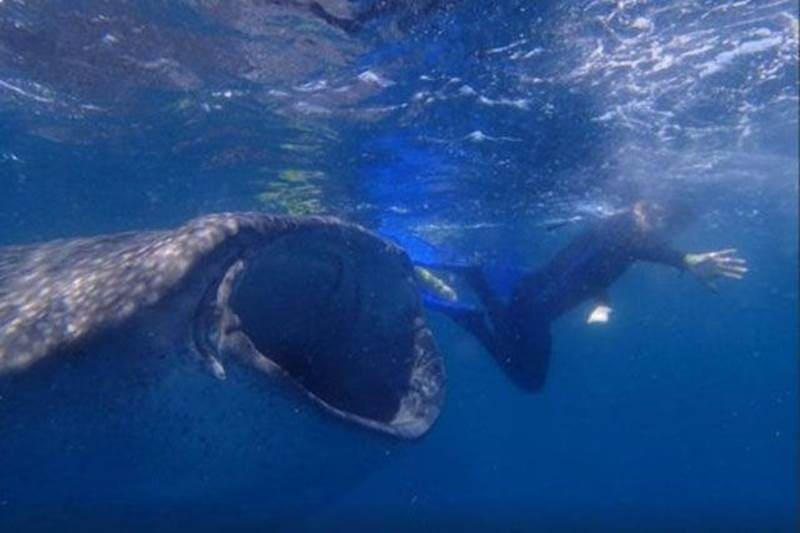 Diver swimming next to a whale