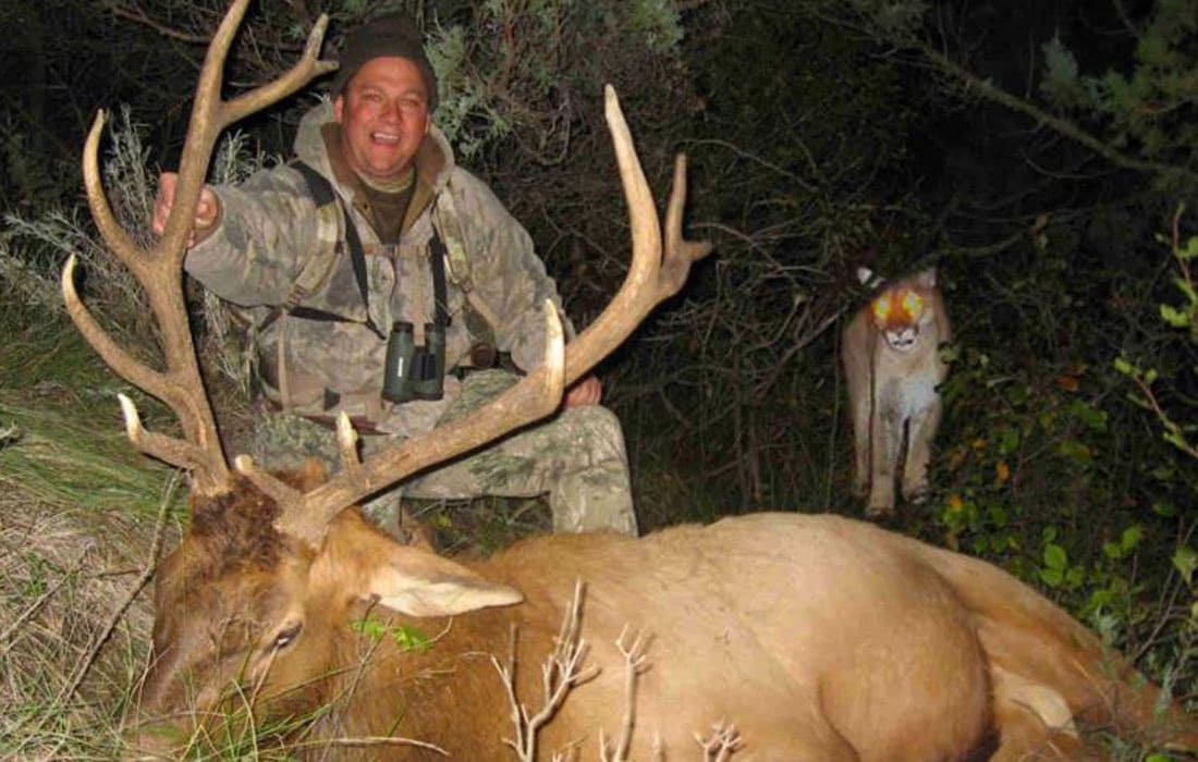 Man next to a moose with a mountain lion behind him