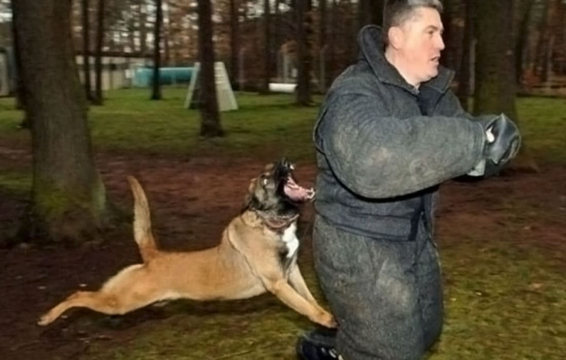 A man being attacked by a dog