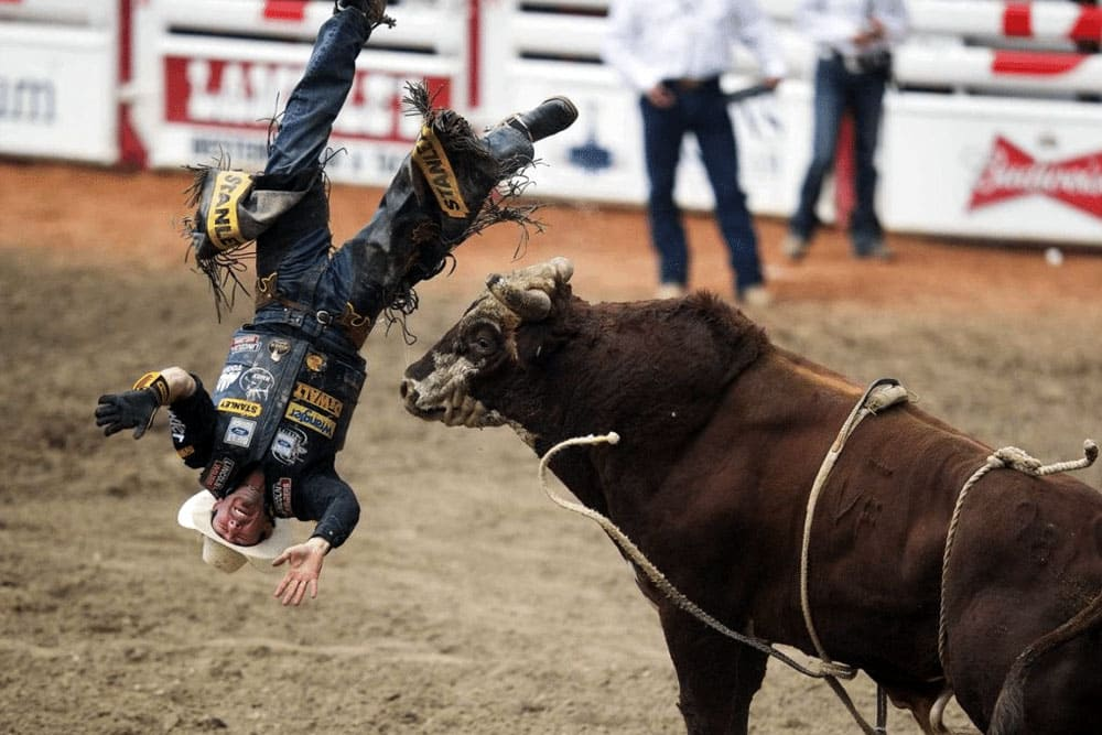 Cowboy falling down head first next to a bull