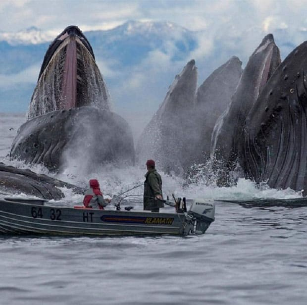 People on a boat in front of whales