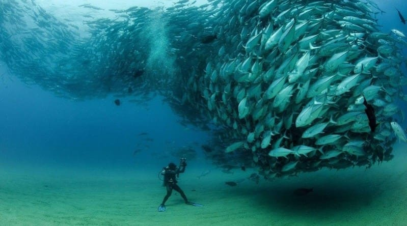 Scuba diver and a school of fish