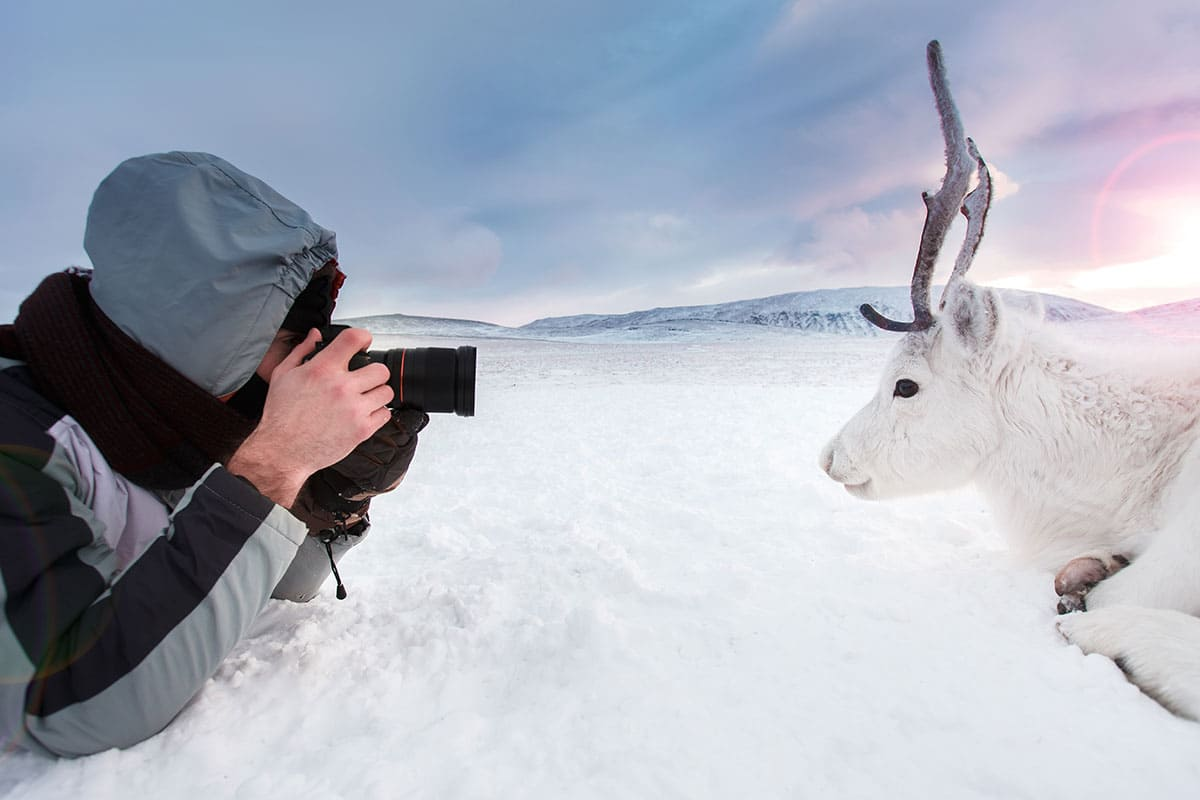 A white reindeer posing for a picture