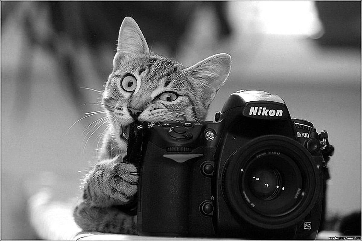 A kitten biting a camera