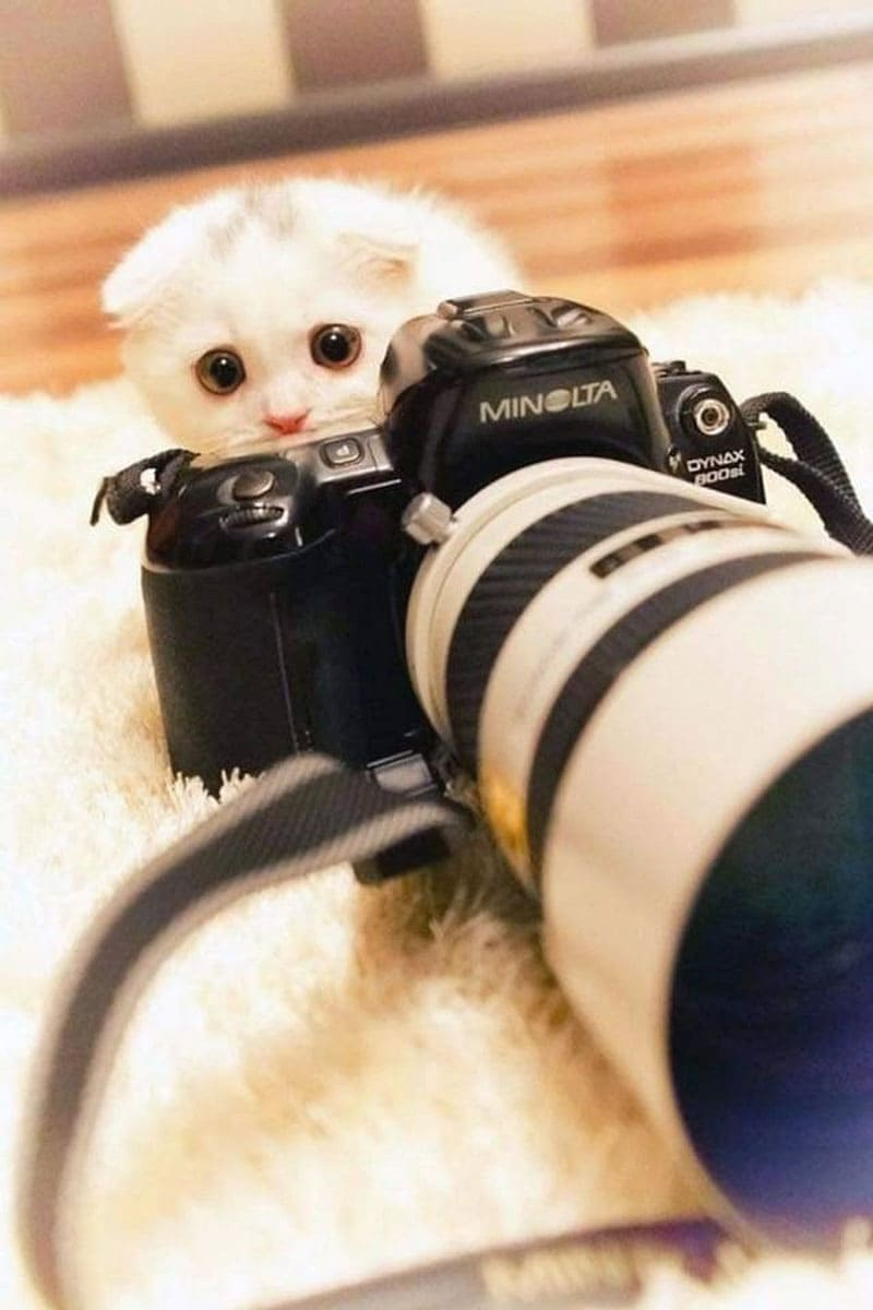 A kitten standing behind a camera with large eyes