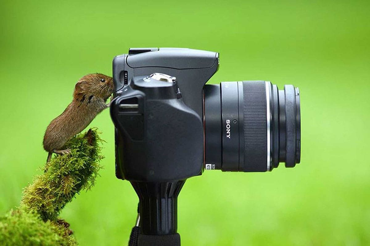 A small forest mouse closely studying a camera