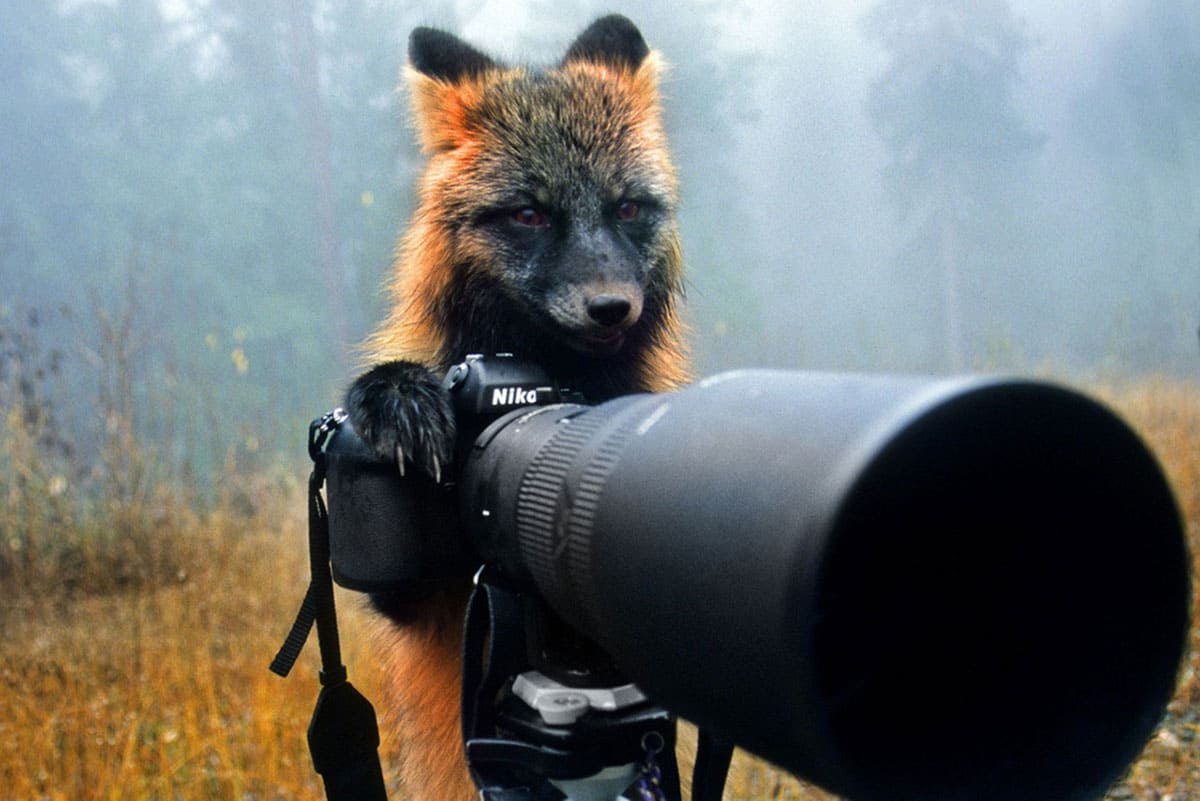 A fox with a deep, emotional stare in his eyes