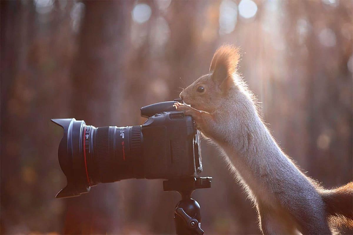 Squirrel shooting some photos