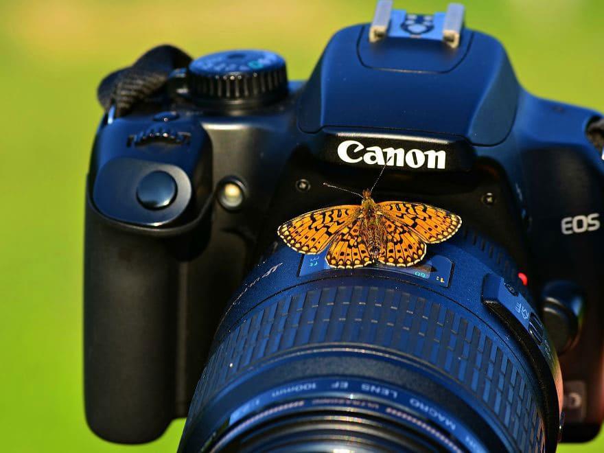 Camera sitting on a camera