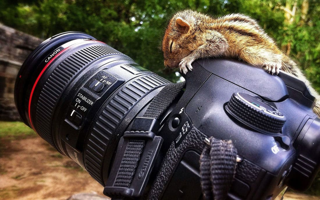 Baby squirrel taking a nap on a camera