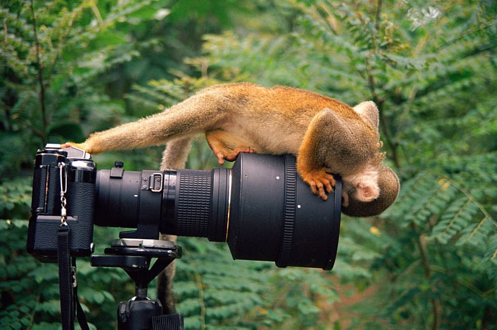 Monkey sticking his face inside a lens
