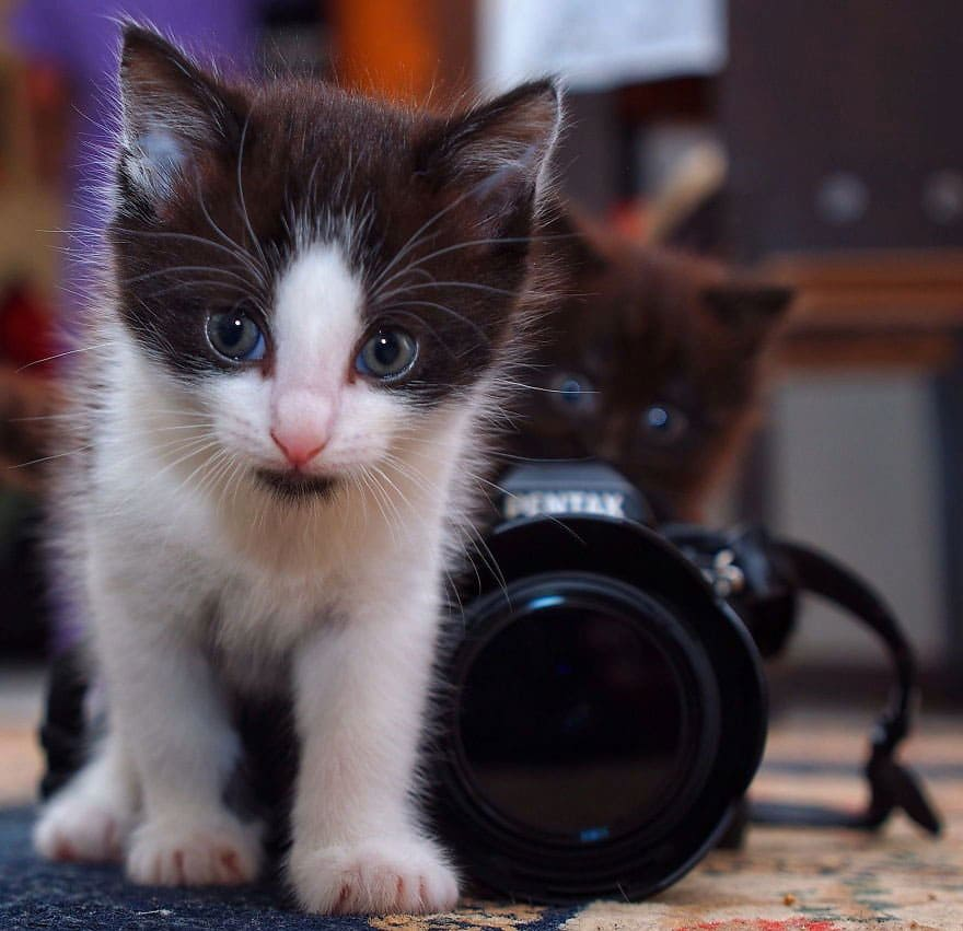 One kitten standing behind a camera and the other one walking away