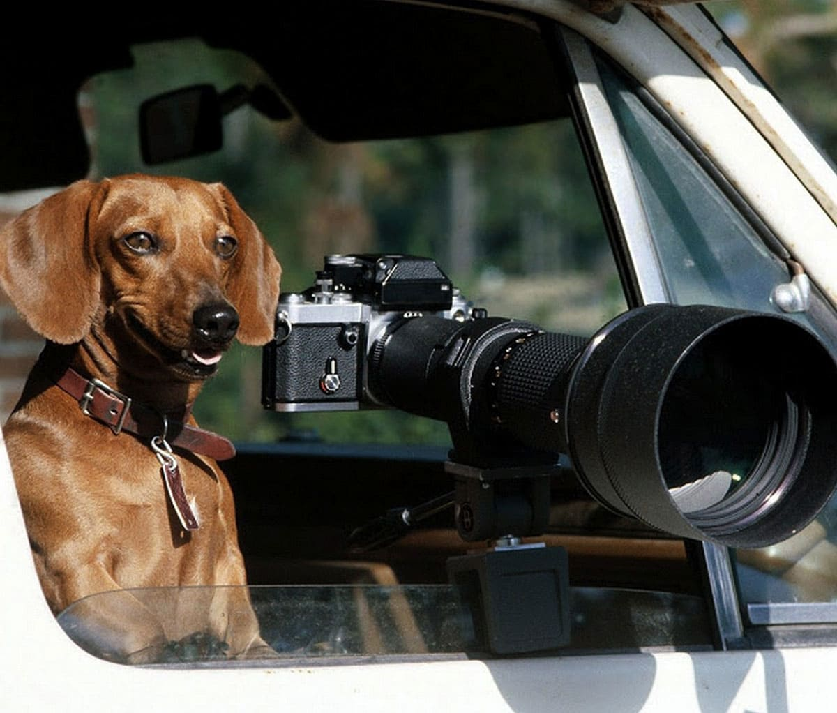 Dog sitting next to a camera