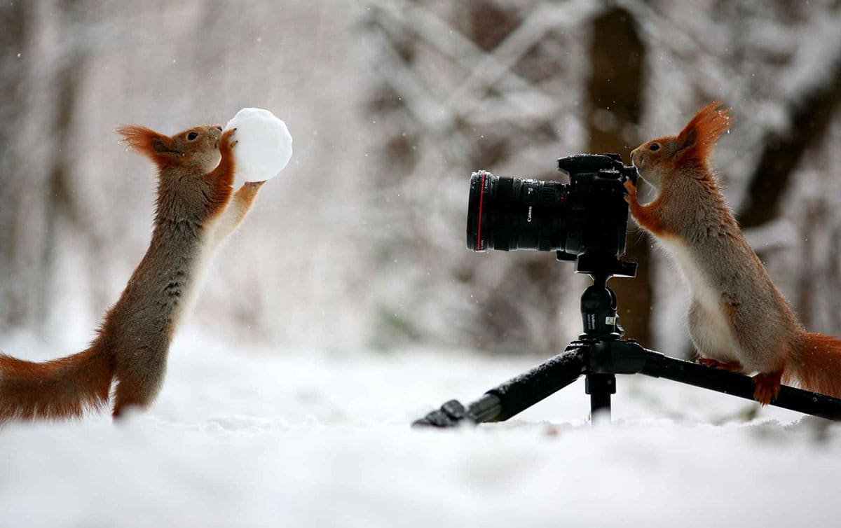 A squirrel throwing an ice ball and another squirrel standing behind the camera