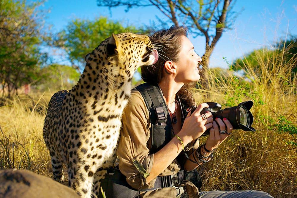 A Cheetah licking a woman's hair