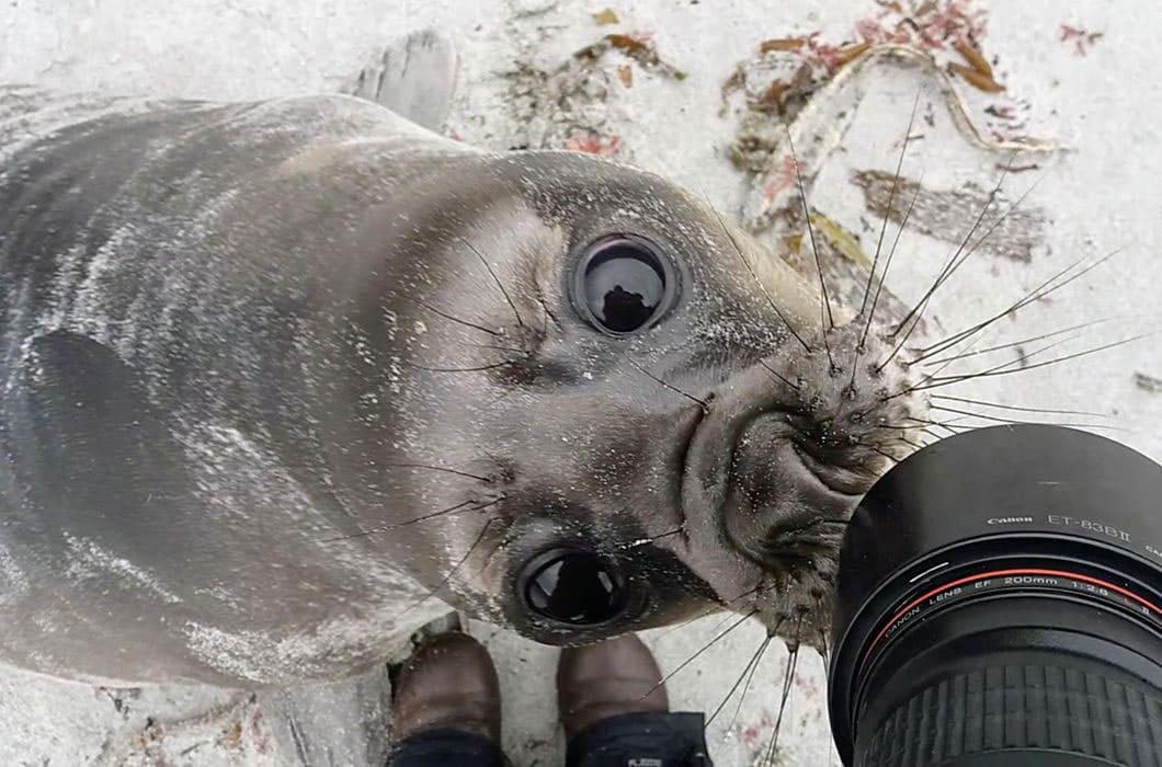 A seal investigating a camera