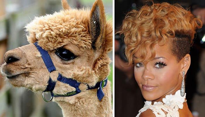 Rihanna and an emu
