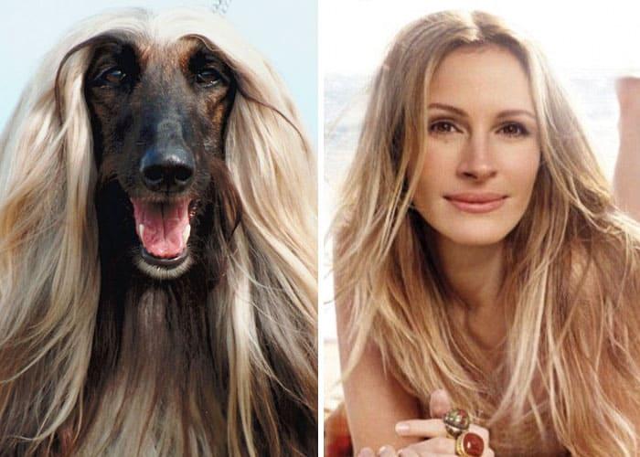 Julia Roberts and a dog