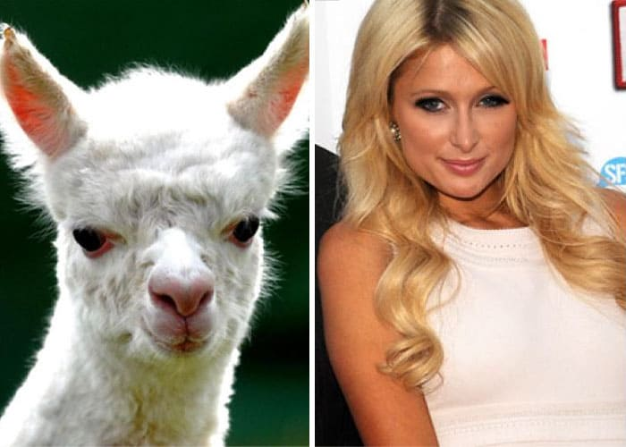 Paris Hilton and a llama