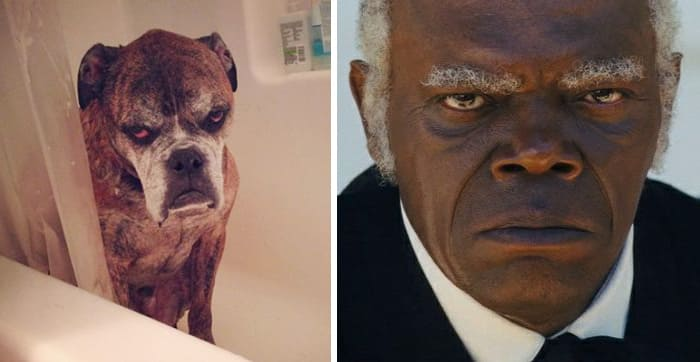 Samuel L. Jackson and a dog