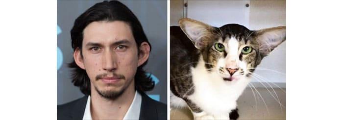 Adam Driver and a cat