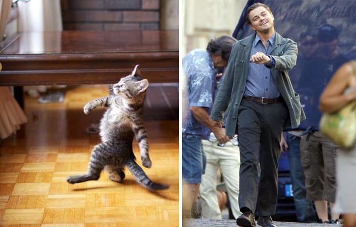 Leonardo DiCaprio and a cat
